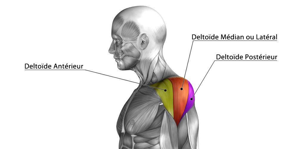 Entraînement des épaules | Les 5 meilleurs exercices pour ...