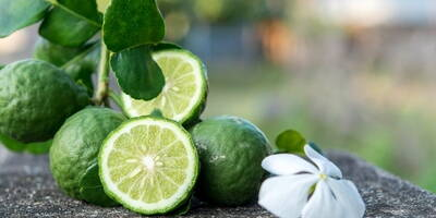 Bergamot | Origins, properties and benefits of bergamot