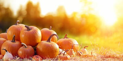 Pumpkin: the vegetable that is good for us